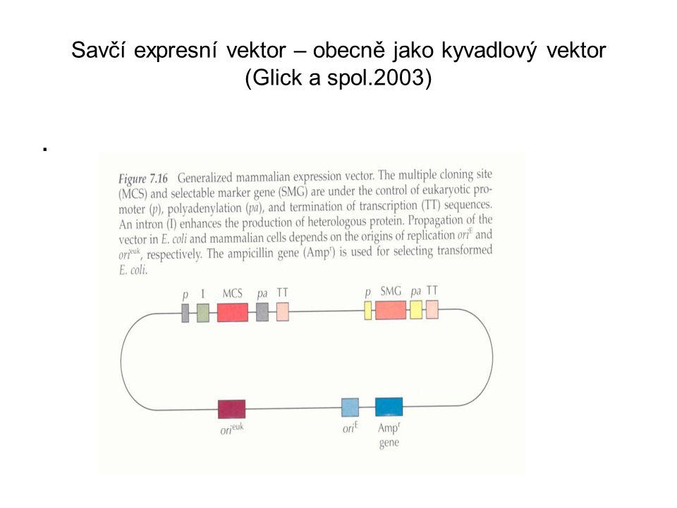 Savčí expresní vektor – obecně jako kyvadlový vektor (Glick a spol.2003).