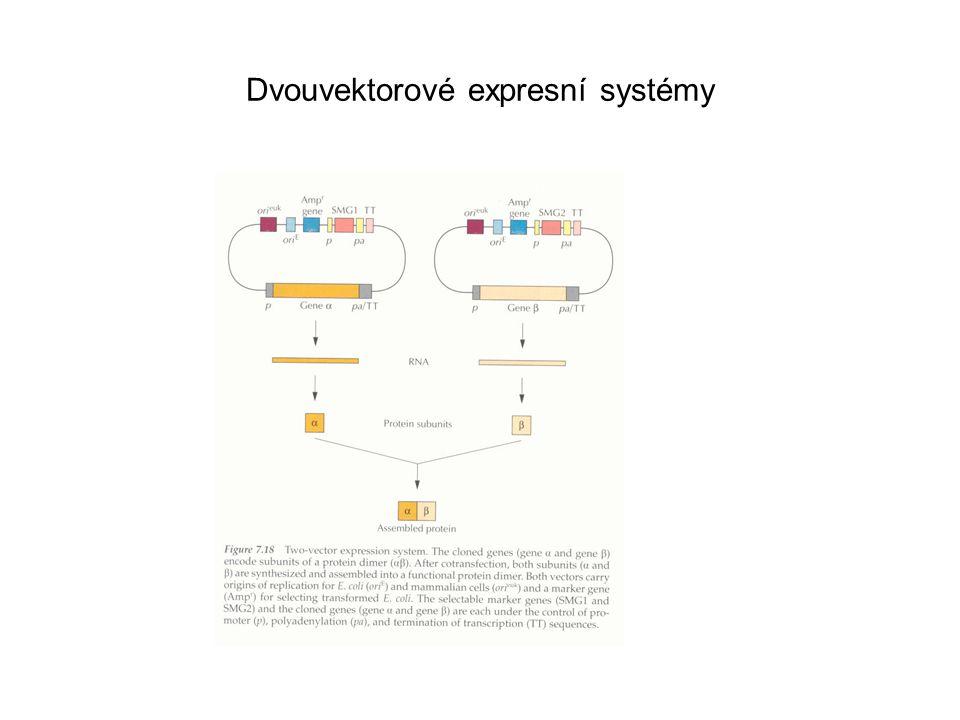 Dvouvektorové expresní systémy