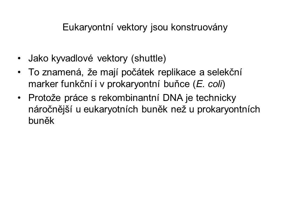 Eukaryontní vektory jsou konstruovány Jako kyvadlové vektory (shuttle) To znamená, že mají počátek replikace a selekční marker funkční i v prokaryontn