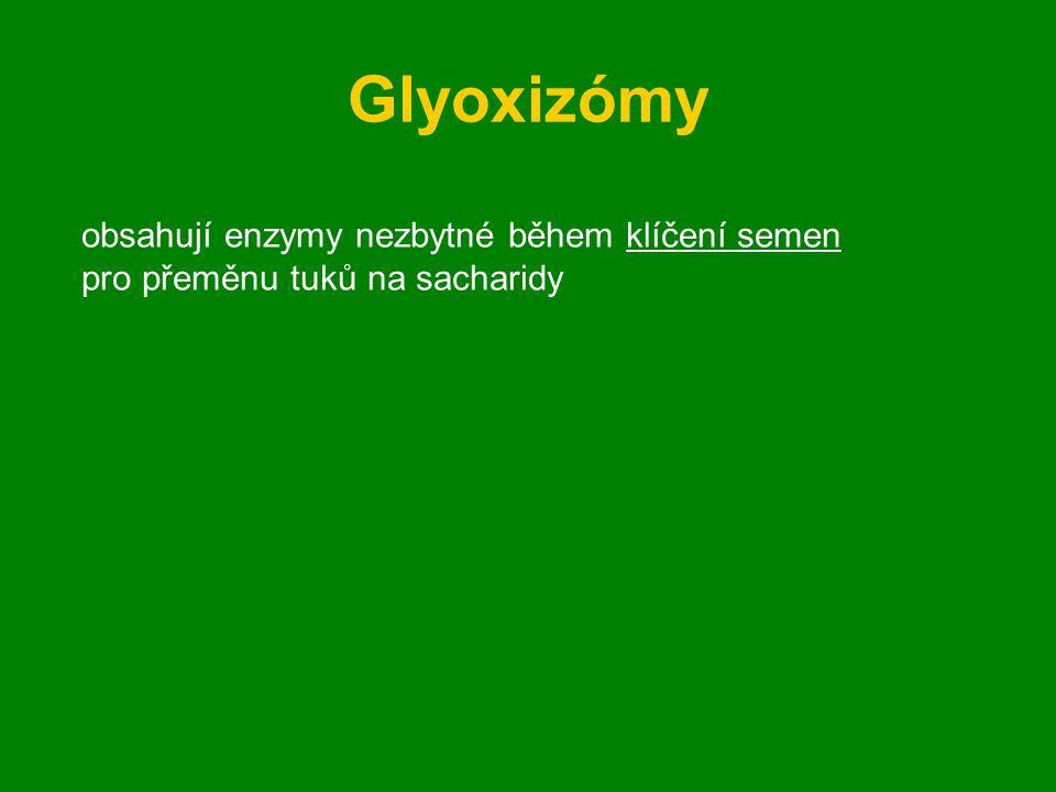 Glyoxizómy obsahují enzymy nezbytné během klíčení semen pro přeměnu tuků na sacharidy