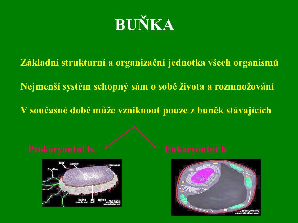 BUŇKA Základní strukturní a organizační jednotka všech organismů Nejmenší systém schopný sám o sobě života a rozmnožování V současné době může vznikno