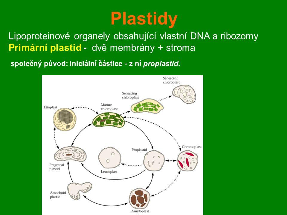 Plastidy Lipoproteinové organely obsahující vlastní DNA a ribozomy Primární plastid - dvě membrány + stroma společný původ: iniciální částice - z ní p