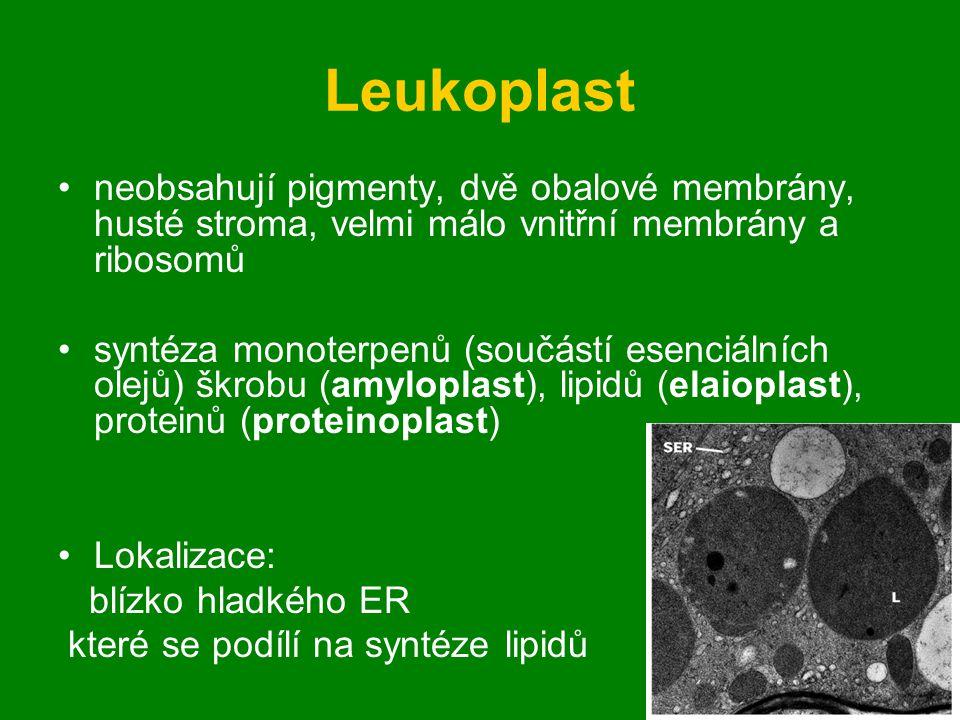 Leukoplast neobsahují pigmenty, dvě obalové membrány, husté stroma, velmi málo vnitřní membrány a ribosomů syntéza monoterpenů (součástí esenciálních