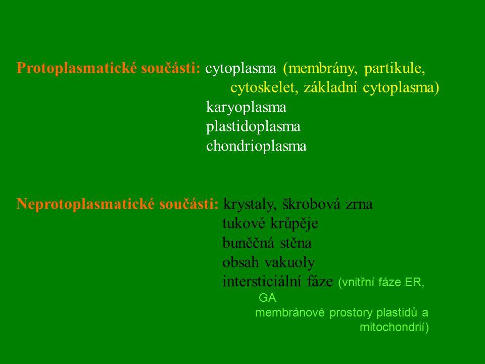 Protoplasmatické součásti: cytoplasma (membrány, partikule, cytoskelet, základní cytoplasma) karyoplasma plastidoplasma chondrioplasma Neprotoplasmati