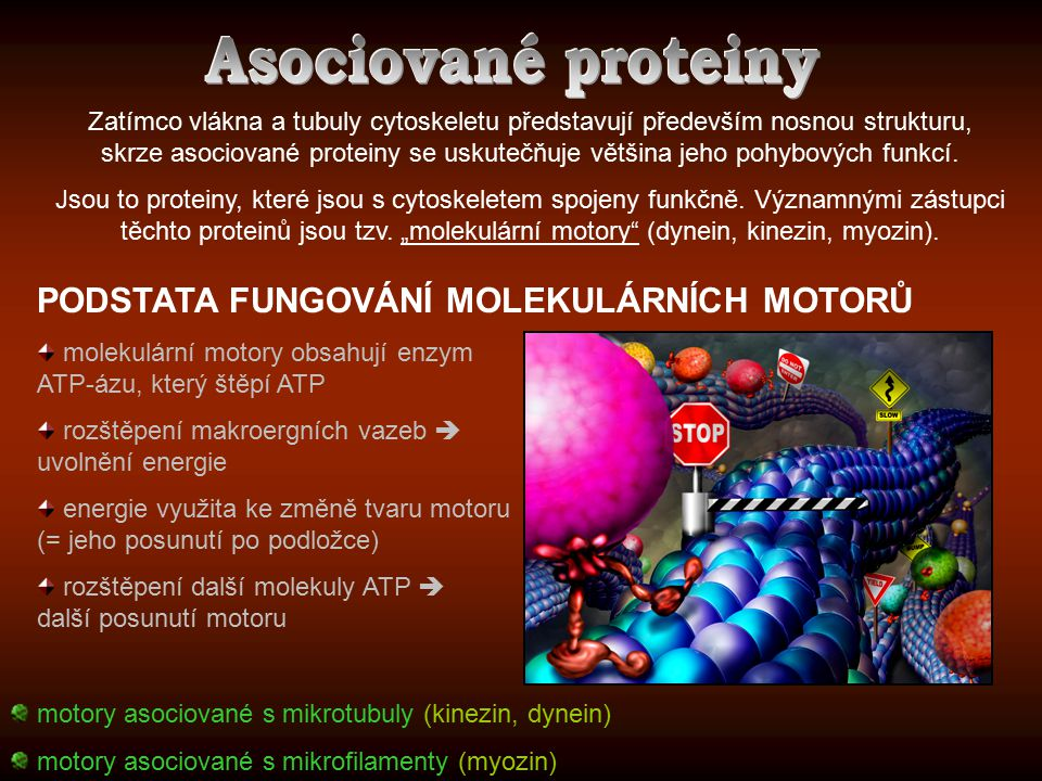 PODSTATA FUNGOVÁNÍ MOLEKULÁRNÍCH MOTORŮ molekulární motory obsahují enzym ATP-ázu, který štěpí ATP rozštěpení makroergních vazeb  uvolnění energie en