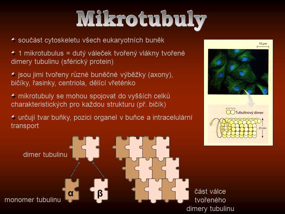 součást cytoskeletu všech eukaryotních buněk 1 mikrotubulus = dutý váleček tvořený vlákny tvořené dimery tubulinu (sférický protein) jsou jimi tvořeny