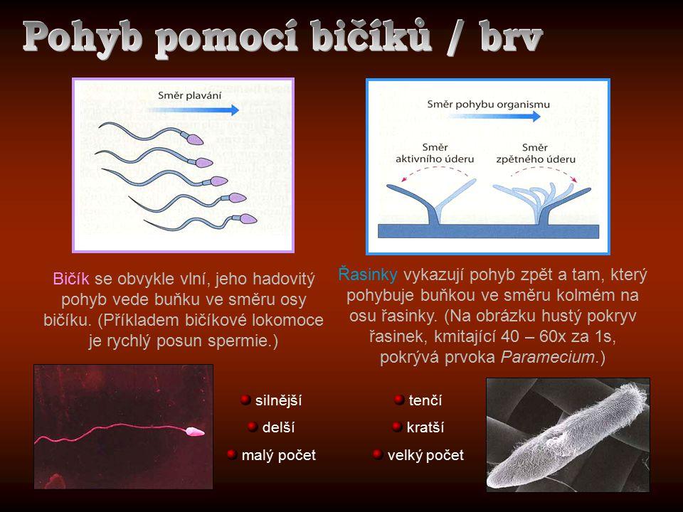 Bičík se obvykle vlní, jeho hadovitý pohyb vede buňku ve směru osy bičíku. (Příkladem bičíkové lokomoce je rychlý posun spermie.) Řasinky vykazují poh
