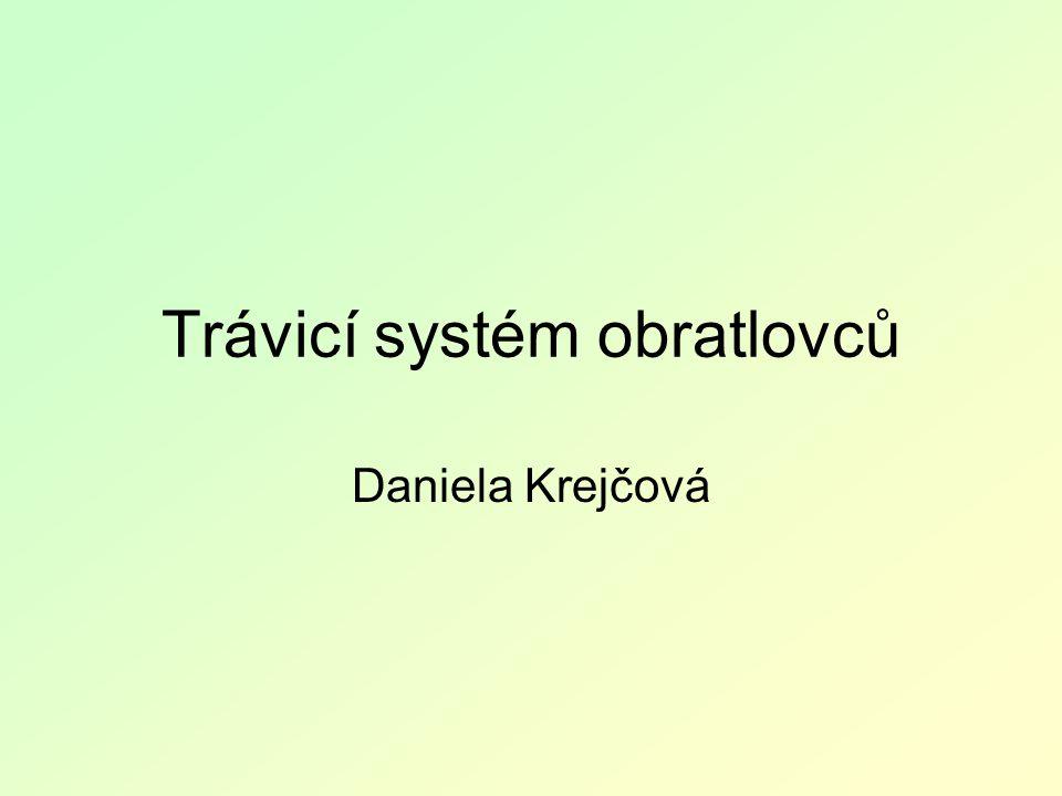 Trávicí systém obratlovců Daniela Krejčová