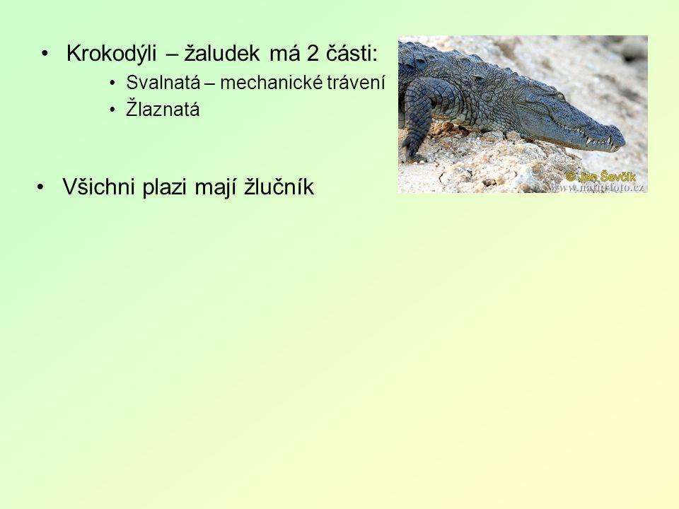 Krokodýli – žaludek má 2 části: Svalnatá – mechanické trávení Žlaznatá Všichni plazi mají žlučník