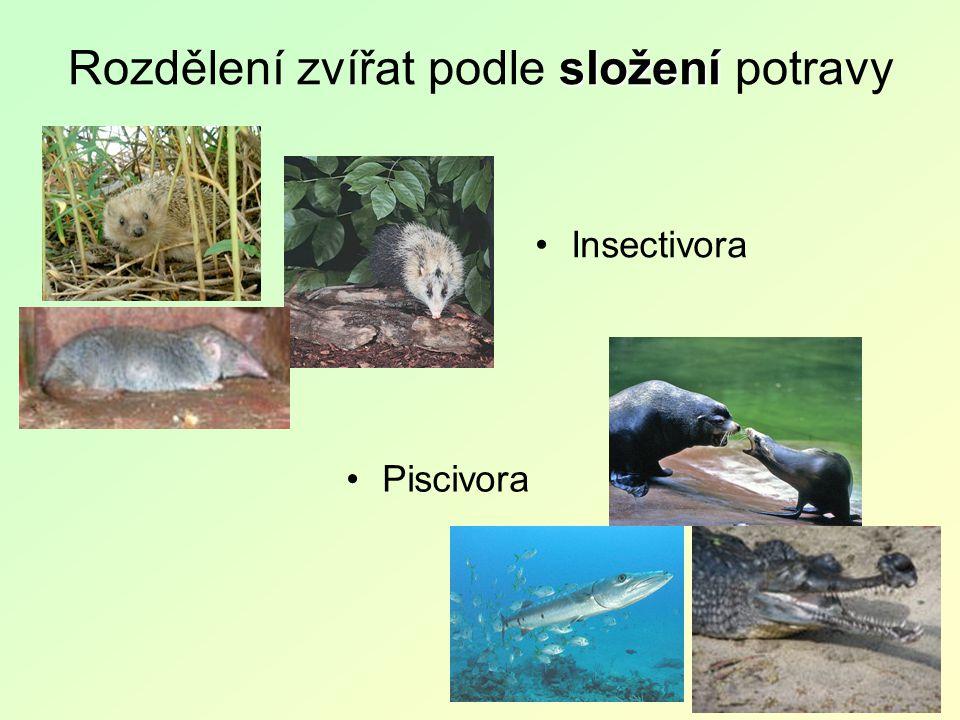 složení Rozdělení zvířat podle složení potravy Insectivora Piscivora