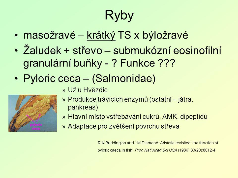 Ryby masožravé – krátký TS x býložravé Žaludek + střevo – submukózní eosinofilní granulární buňky - .