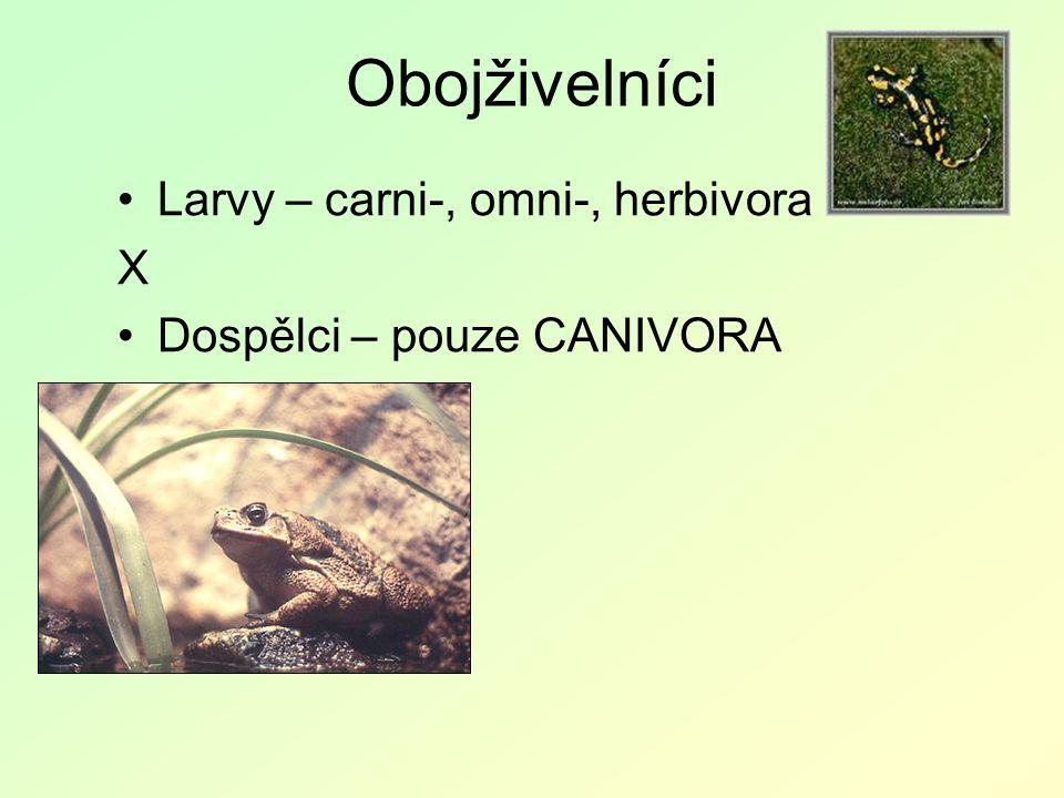 Obojživelníci Larvy – carni-, omni-, herbivora X Dospělci – pouze CANIVORA