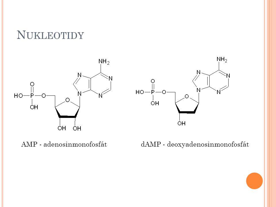 N UKLEOTIDY AMP - adenosinmonofosfátdAMP - deoxyadenosinmonofosfát
