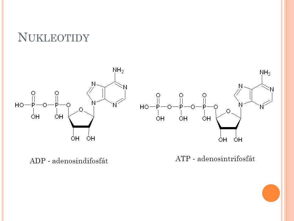 N UKLEOTIDY ADP - adenosindifosfát ATP - adenosintrifosfát