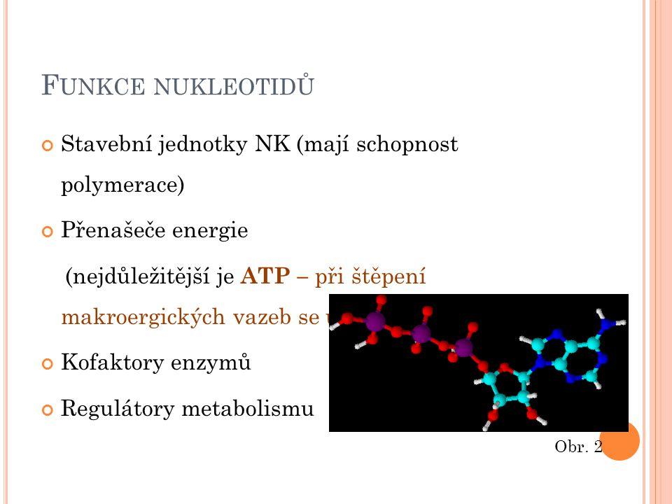 F UNKCE NUKLEOTIDŮ Stavební jednotky NK (mají schopnost polymerace) Přenašeče energie (nejdůležitější je ATP – při štěpení makroergických vazeb se uvo