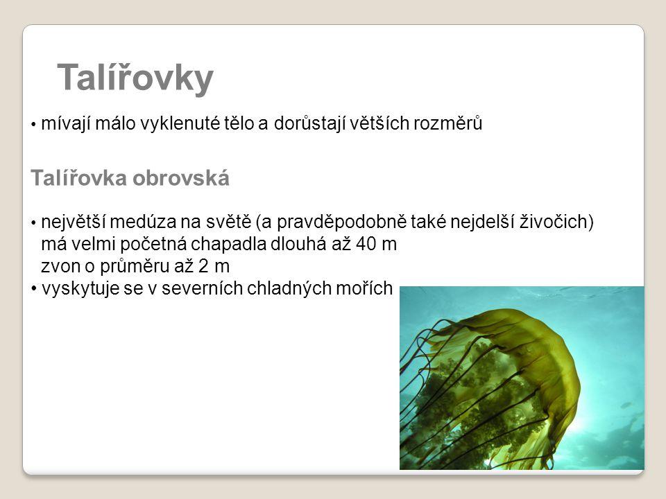 Talířovky mívají málo vyklenuté tělo a dorůstají větších rozměrů Talířovka obrovská největší medúza na světě (a pravděpodobně také nejdelší živočich)