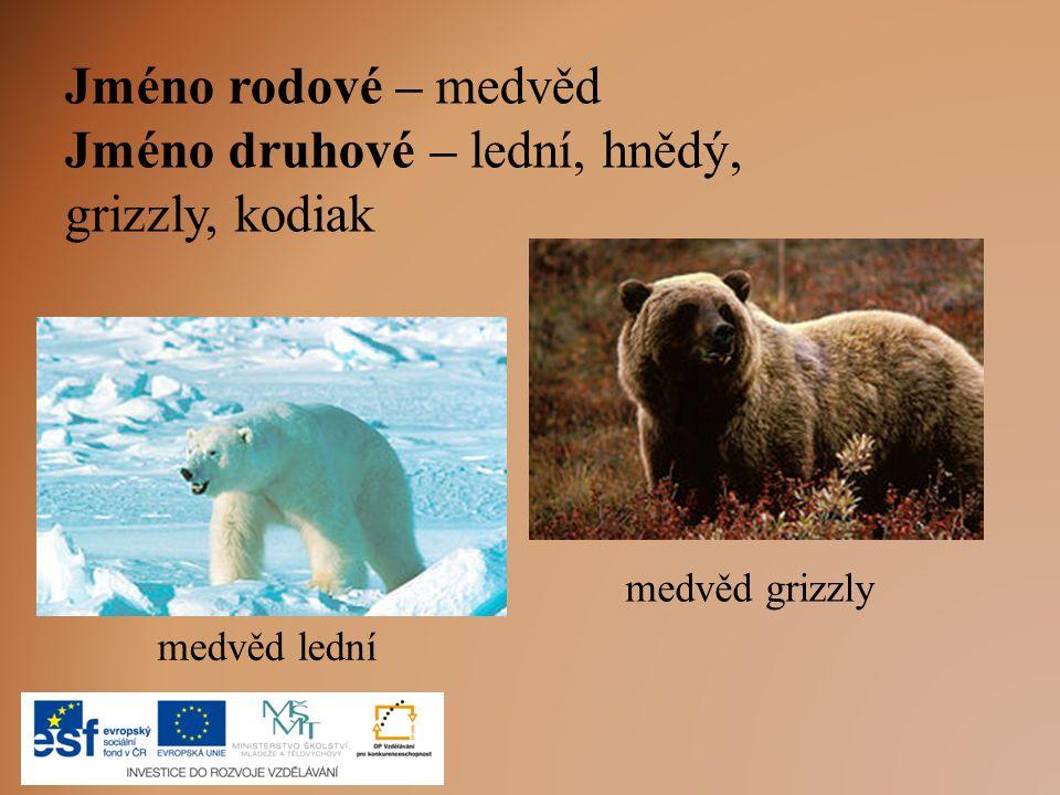 Jméno rodové – medvěd Jméno druhové – lední, hnědý, grizzly, kodiak medvěd lední medvěd grizzly