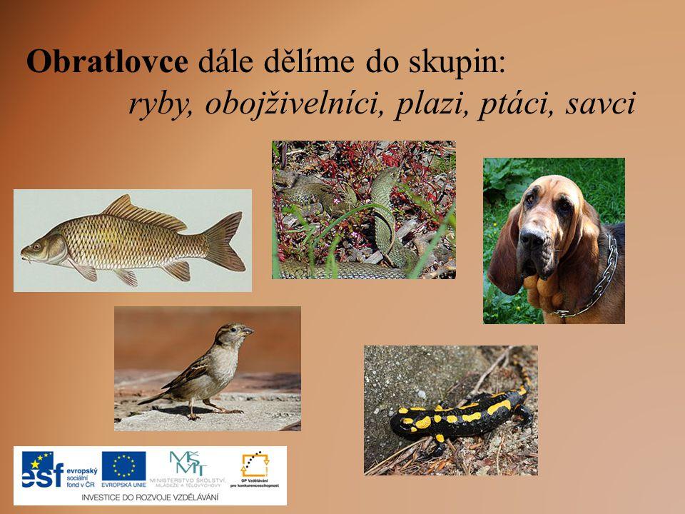 Obratlovce dále dělíme do skupin: ryby, obojživelníci, plazi, ptáci, savci