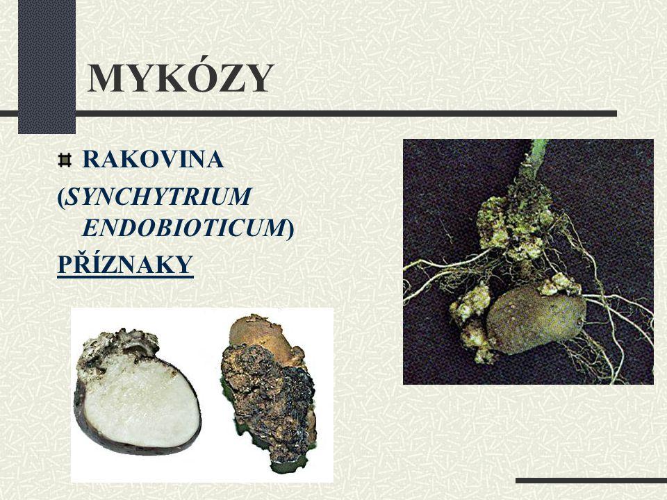 RAKOVINA (SYNCHYTRIUM ENDOBIOTICUM) PŘÍZNAKY