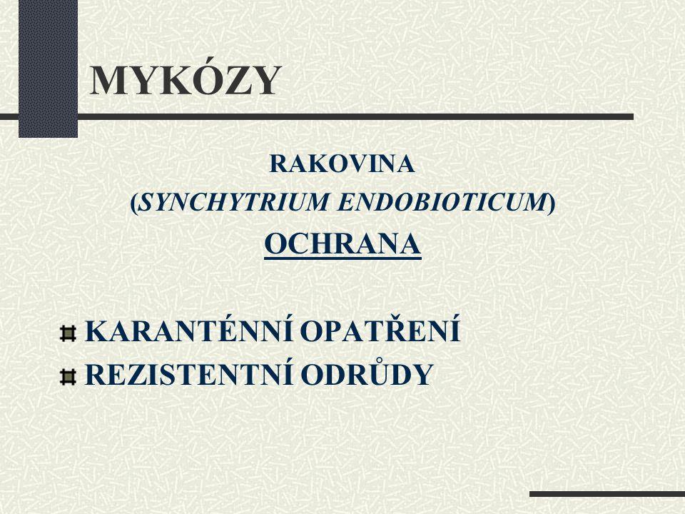 MYKÓZY RAKOVINA (SYNCHYTRIUM ENDOBIOTICUM) OCHRANA KARANTÉNNÍ OPATŘENÍ REZISTENTNÍ ODRŮDY