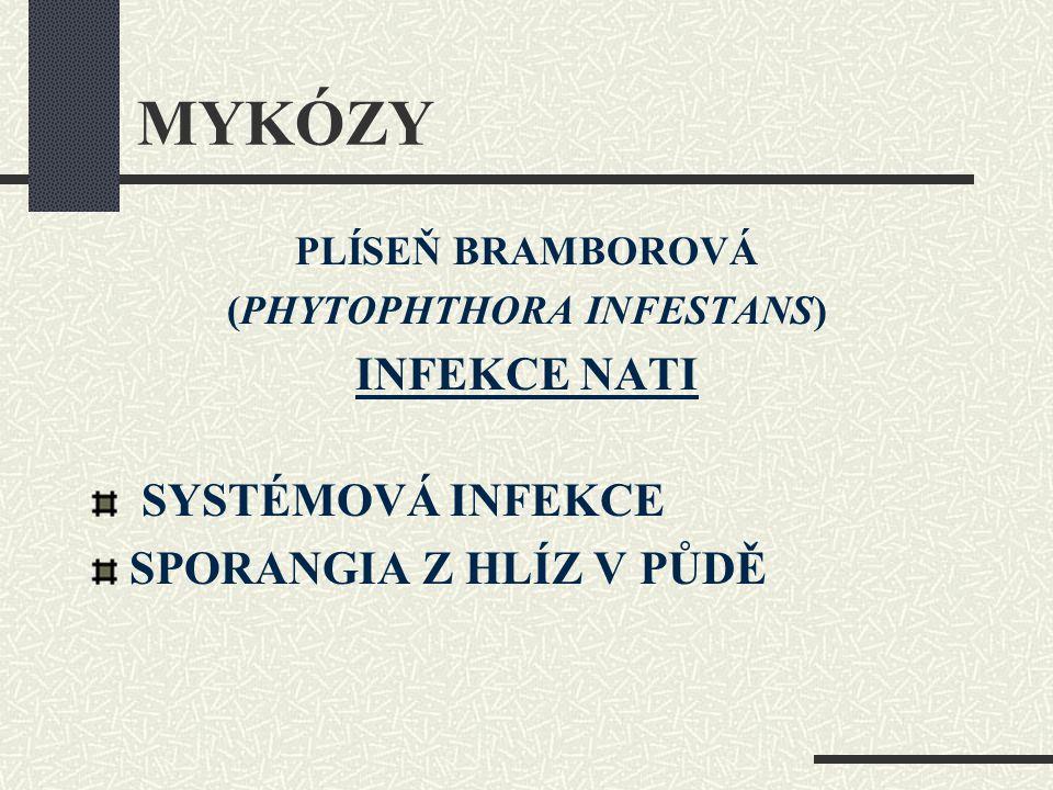 MYKÓZY PLÍSEŇ BRAMBOROVÁ (PHYTOPHTHORA INFESTANS) INFEKCE NATI SYSTÉMOVÁ INFEKCE SPORANGIA Z HLÍZ V PŮDĚ