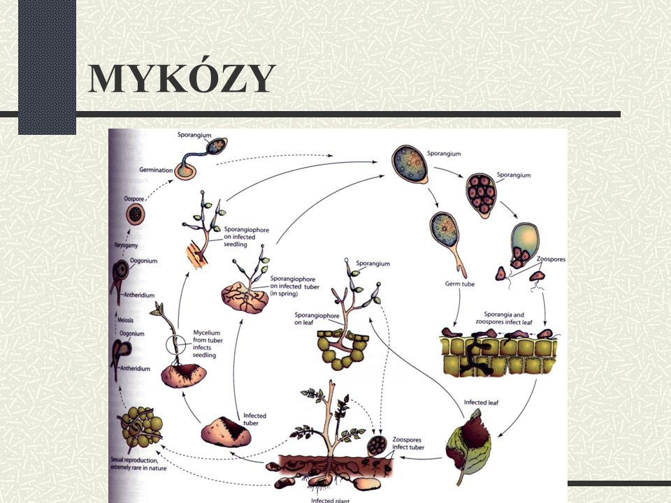 MYKÓZY