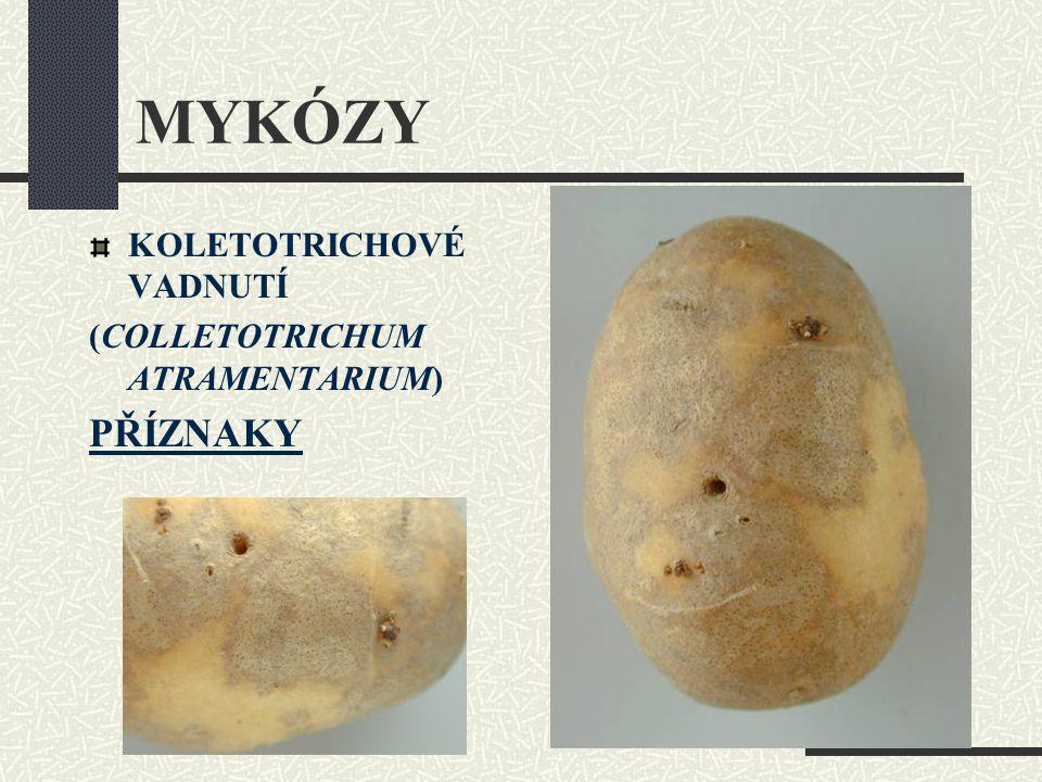 MYKÓZY KOLETOTRICHOVÉ VADNUTÍ (COLLETOTRICHUM ATRAMENTARIUM) PŘÍZNAKY