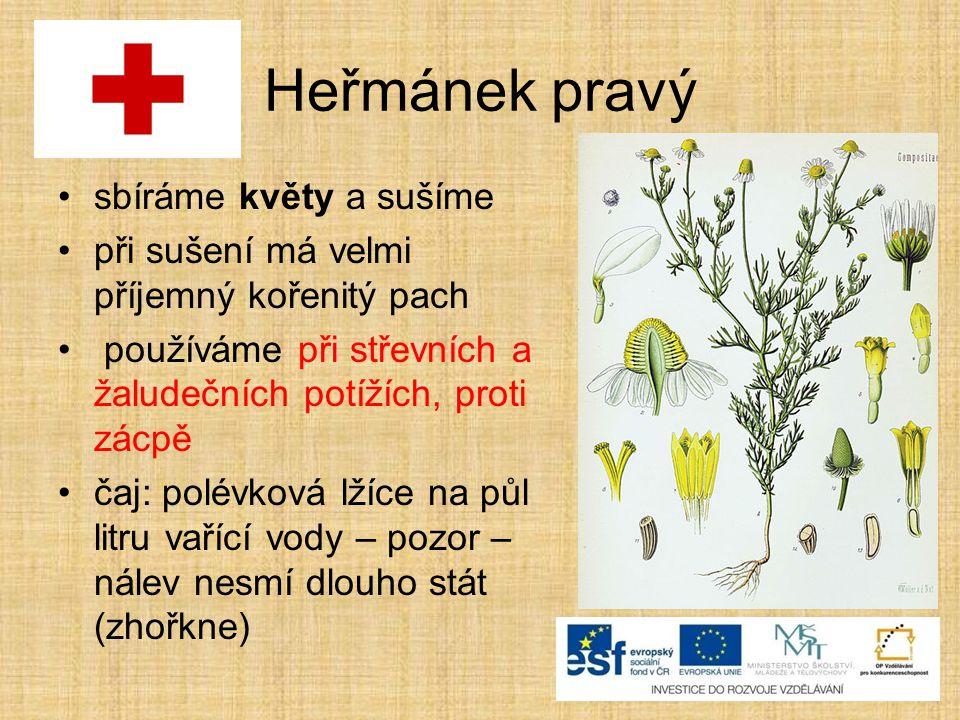 Heřmánek pravý sbíráme květy a sušíme při sušení má velmi příjemný kořenitý pach používáme při střevních a žaludečních potížích, proti zácpě čaj: polé