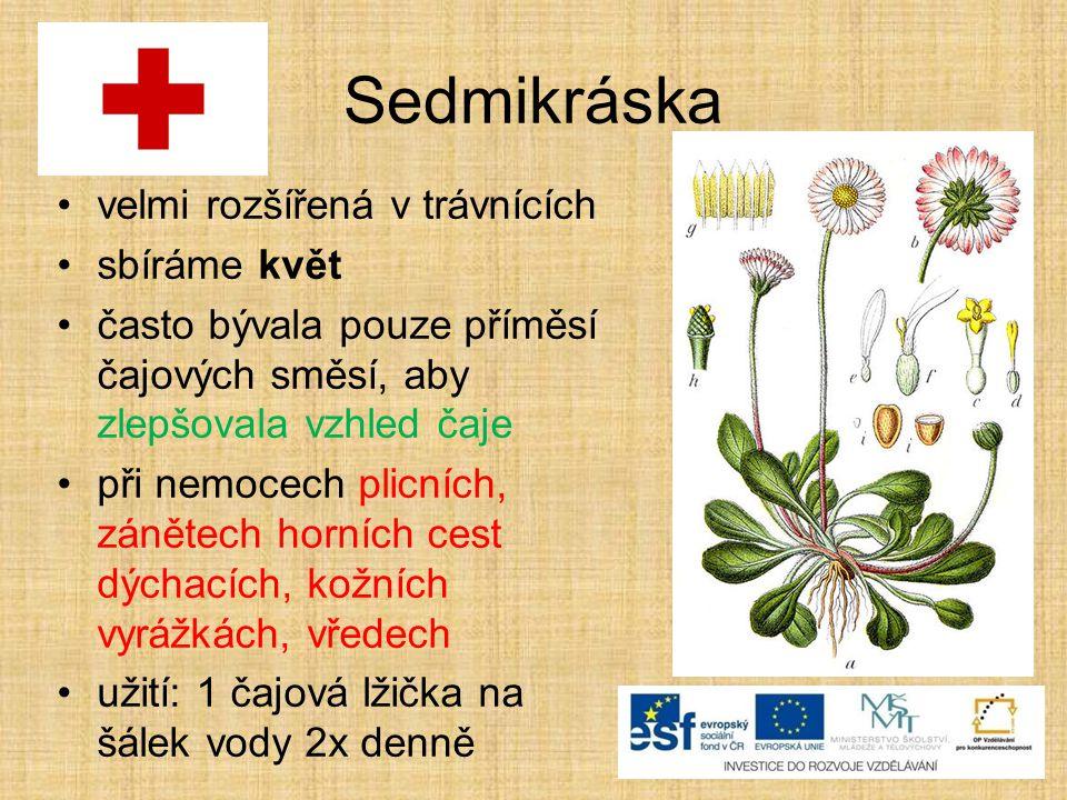 Sedmikráska velmi rozšířená v trávnících sbíráme květ často bývala pouze příměsí čajových směsí, aby zlepšovala vzhled čaje při nemocech plicních, zánětech horních cest dýchacích, kožních vyrážkách, vředech užití: 1 čajová lžička na šálek vody 2x denně