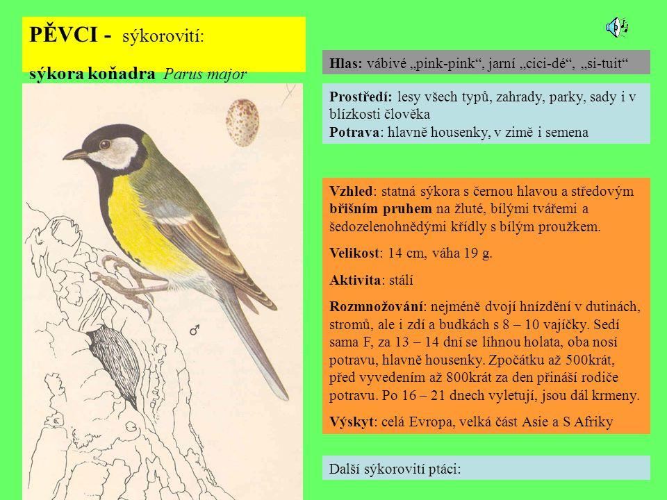 PĚVCI - sýkorovití: sýkora koňadra Parus major Další sýkorovití ptáci: Prostředí: lesy všech typů, zahrady, parky, sady i v blízkosti člověka Potrava: hlavně housenky, v zimě i semena Vzhled: statná sýkora s černou hlavou a středovým břišním pruhem na žluté, bílými tvářemi a šedozelenohnědými křídly s bílým proužkem.