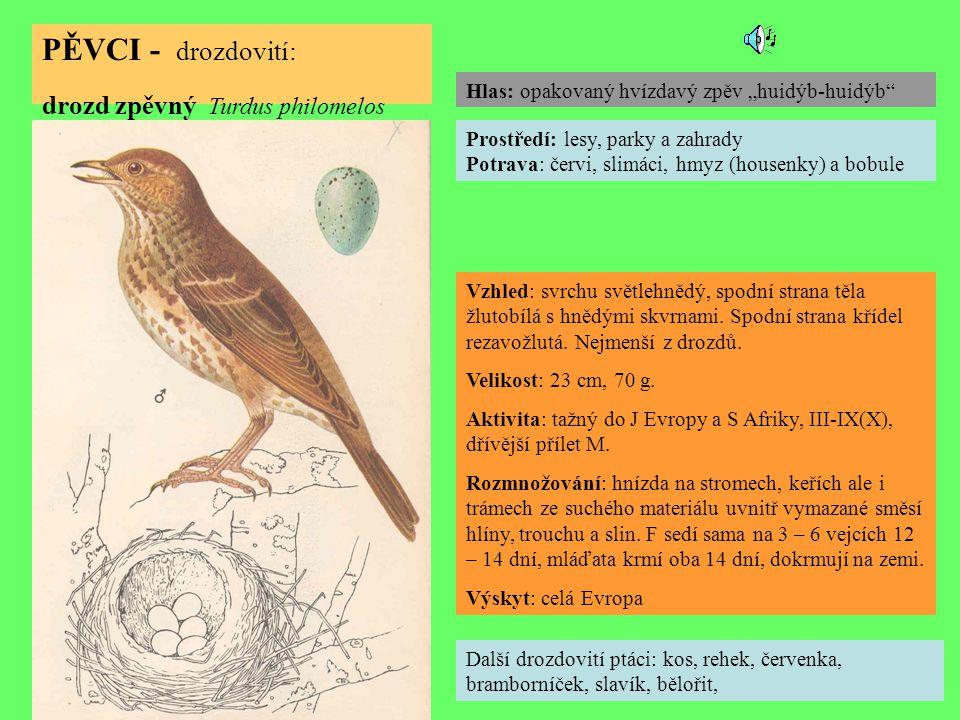 PĚVCI - drozdovití: drozd zpěvný Turdus philomelos Další drozdovití ptáci: kos, rehek, červenka, bramborníček, slavík, bělořit, Prostředí: lesy, parky a zahrady Potrava: červi, slimáci, hmyz (housenky) a bobule Vzhled: svrchu světlehnědý, spodní strana těla žlutobílá s hnědými skvrnami.