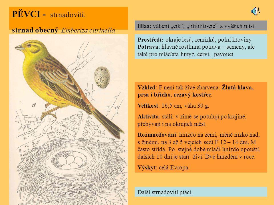 PĚVCI - strnadovití: strnad obecný Emberiza citrinella Další strnadovití ptáci: Prostředí: okraje lesů, remízků, polní křoviny Potrava: hlavně rostlinná potrava – semeny, ale také pro mláďata hmyz, červi, pavouci Vzhled: F není tak živě zbarvena.