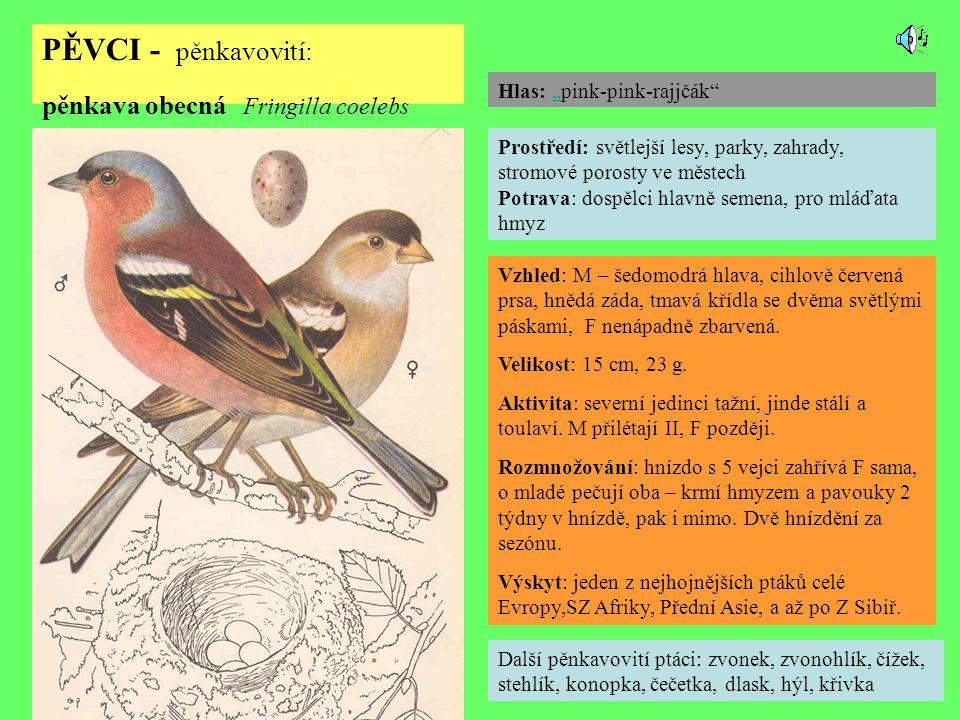 PĚVCI - pěnkavovití: pěnkava obecná Fringilla coelebs Další pěnkavovití ptáci: zvonek, zvonohlík, čížek, stehlík, konopka, čečetka, dlask, hýl, křivka Prostředí: světlejší lesy, parky, zahrady, stromové porosty ve městech Potrava: dospělci hlavně semena, pro mláďata hmyz Vzhled: M – šedomodrá hlava, cihlově červená prsa, hnědá záda, tmavá křídla se dvěma světlými páskami, F nenápadně zbarvená.