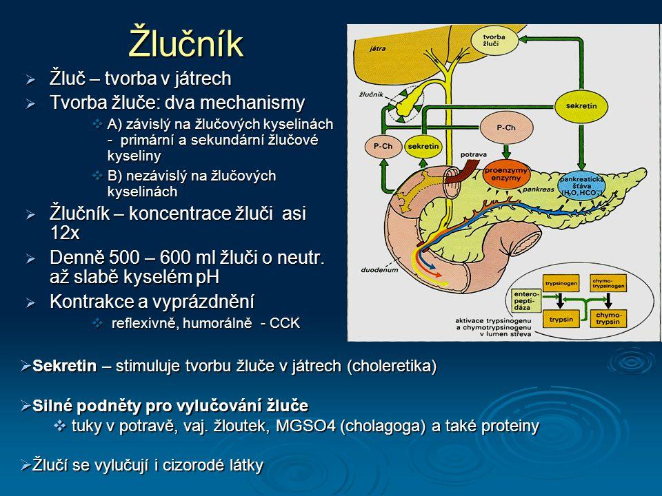 Žlučník  Žluč – tvorba v játrech  Tvorba žluče: dva mechanismy  A) závislý na žlučových kyselinách - primární a sekundární žlučové kyseliny  B) nezávislý na žlučových kyselinách  Žlučník – koncentrace žluči asi 12x  Denně 500 – 600 ml žluči o neutr.