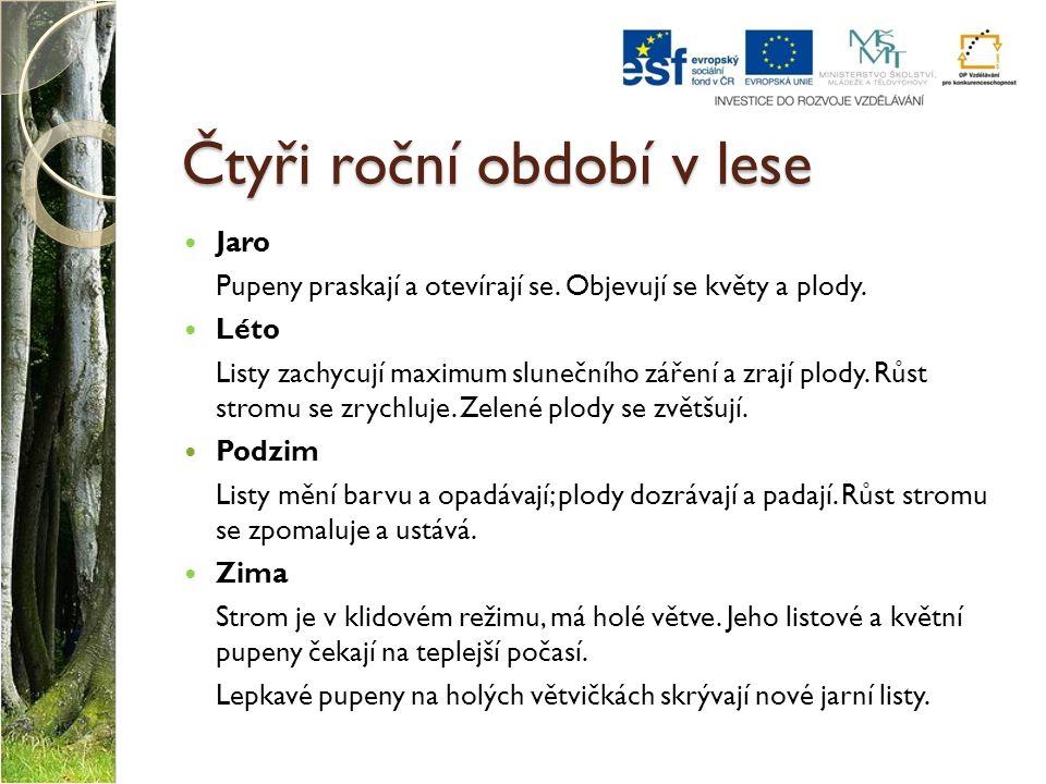 Použité zdroje MATYÁŠEK, Jiří, Věra ŠTIKOVÁ a Josef TRNA.
