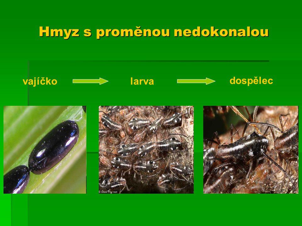 Hmyz s proměnou nedokonalou vajíčkolarva dospělec