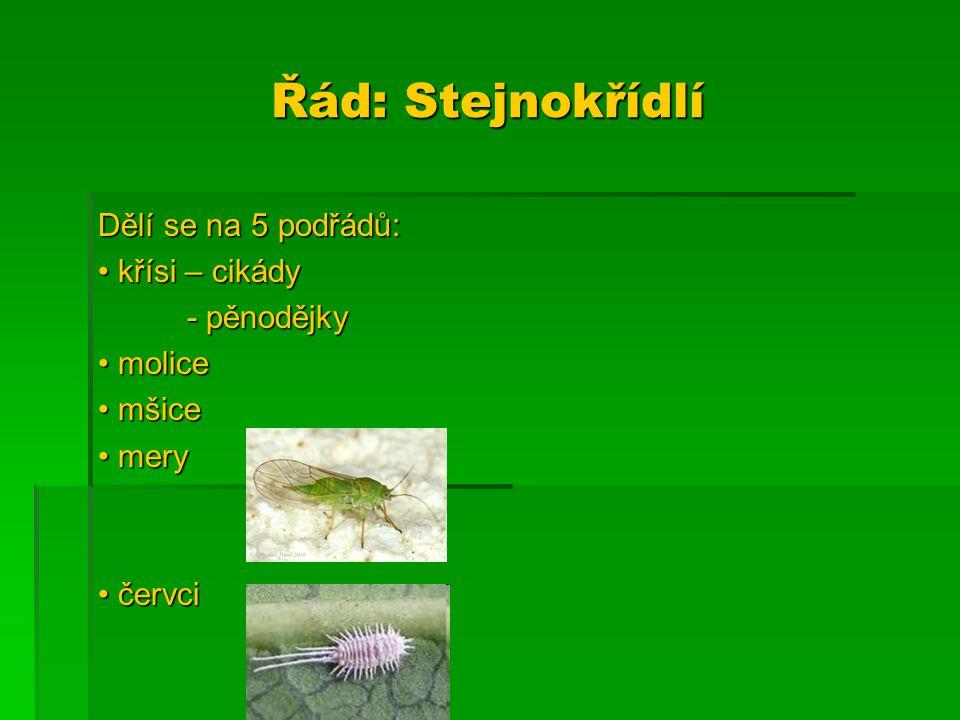Řád: Stejnokřídlí Dělí se na 5 podřádů: křísi – cikády křísi – cikády - pěnodějky - pěnodějky molice molice mšice mšice mery mery červci červci