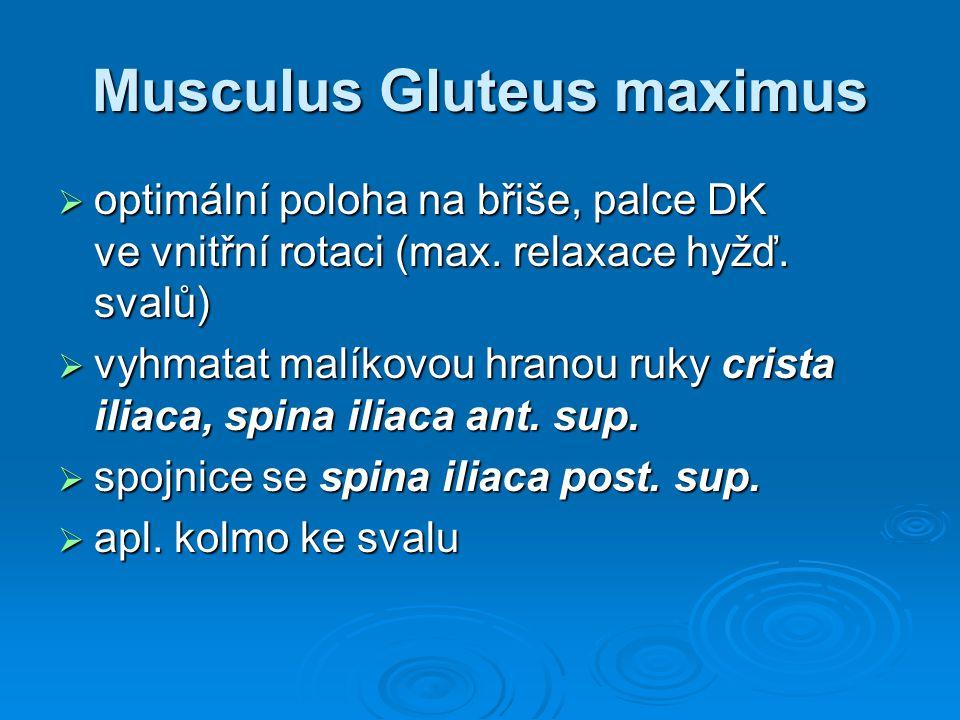 Musculus Gluteus maximus  optimální poloha na břiše, palce DK ve vnitřní rotaci (max. relaxace hyžď. svalů)  vyhmatat malíkovou hranou ruky crista i
