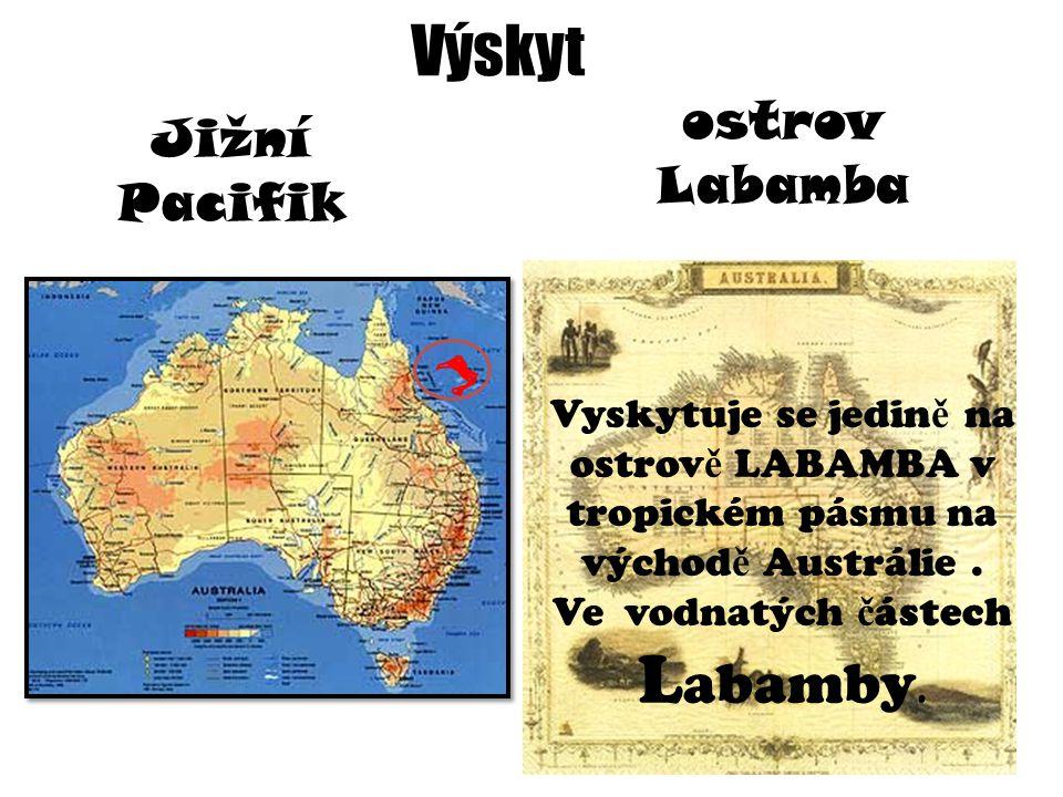 Výskyt Jižní Pacifik ostrov Labamba Vyskytuje se jedin ě na ostrov ě LABAMBA v tropickém pásmu na východ ě Austrálie.