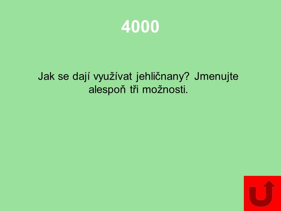 3000 Jak se nazývá skupina nahosemenných rostlin, které jsou podobné palmám?