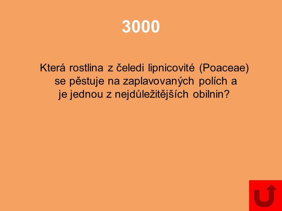 2000 Jak se nazývá plod lipnicovitých (Poaceae)?