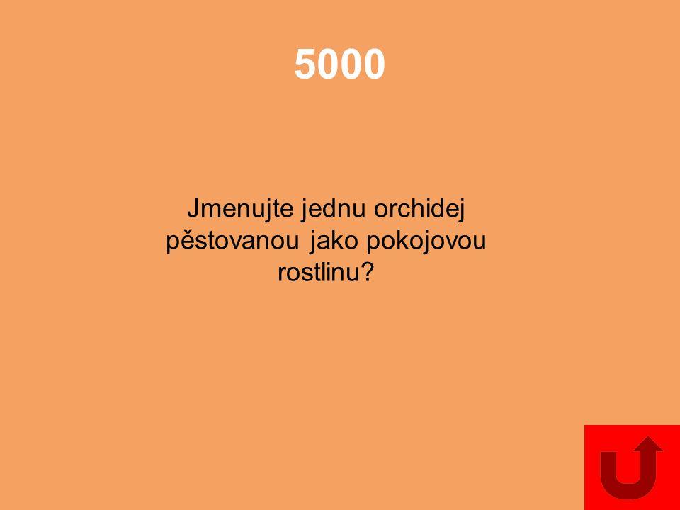 4000 Jmenujte dvě jednoděložné rostliny, které mají trojhranné lodyhy bez kolének.