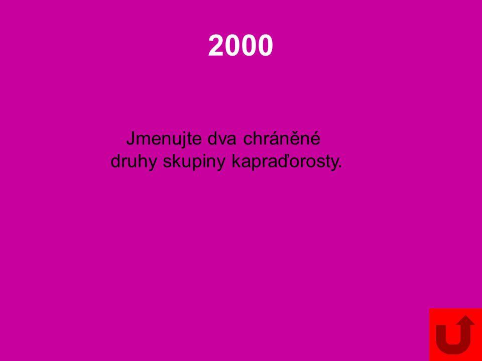 1000 Jmenujte vždy jednoho zástupce skupin: plavuně vranečky šídlatky