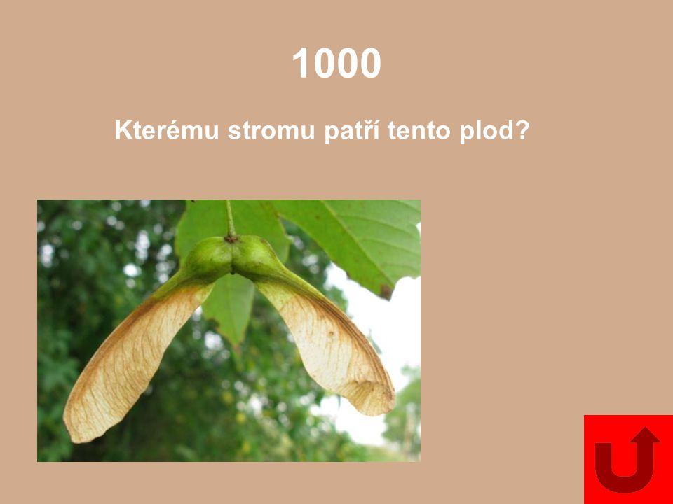 5000 Uveďte alespoň dva příklady kapradin, které se pěstují jako pokojové rostliny.
