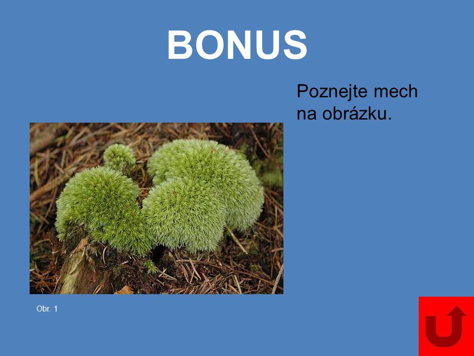 5000 Jmenujte čtyři rostliny, které mají cibuli.