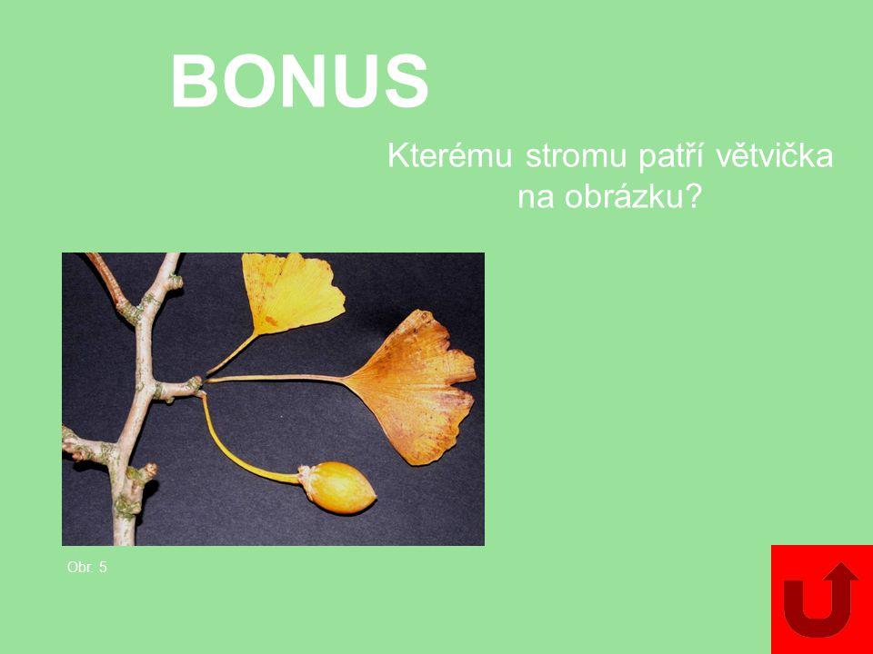 BONUS Poznáte tuto rostlinu?