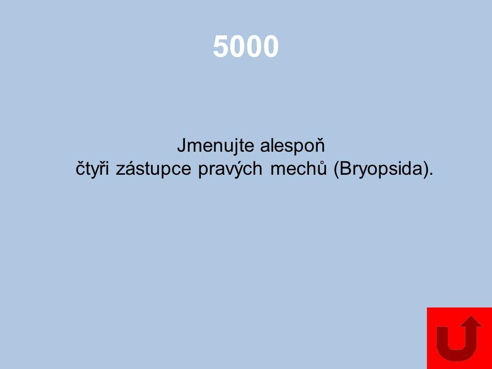 5000 Jmenujte alespoň čtyři zástupce pravých mechů (Bryopsida).