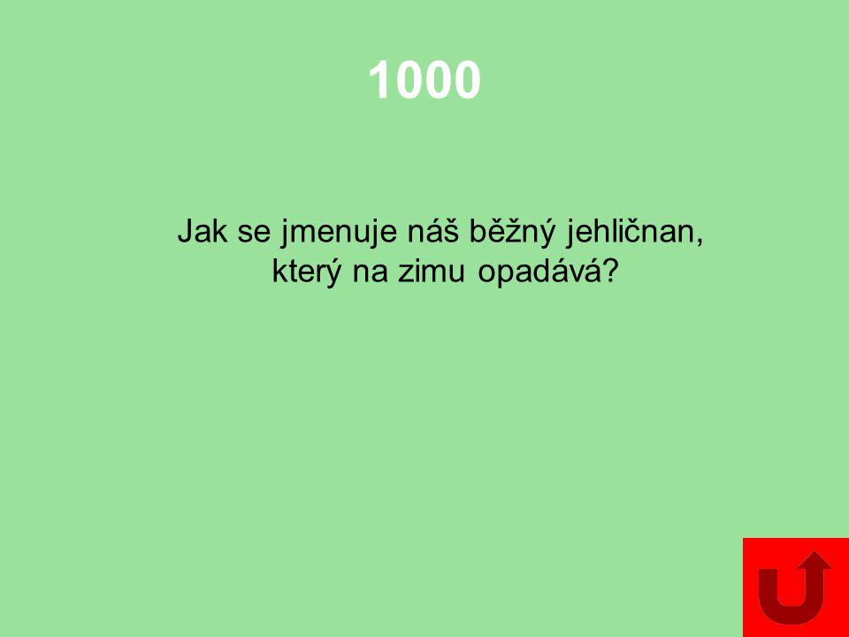 1000 Jak se jmenuje náš běžný jehličnan, který na zimu opadává?