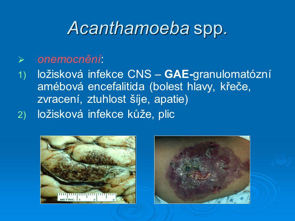 Acanthamoeba spp.   onemocnění: 1) 1) ložisková infekce CNS – GAE-granulomatózní amébová encefalitida (bolest hlavy, křeče, zvracení, ztuhlost šíje,