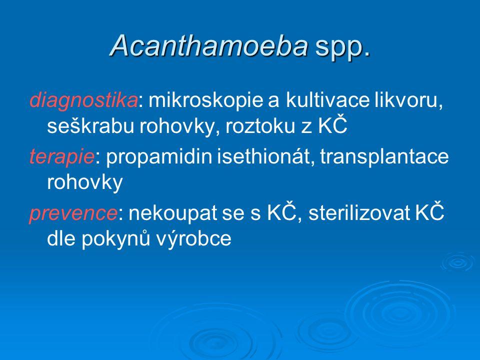 Acanthamoeba spp. diagnostika: mikroskopie a kultivace likvoru, seškrabu rohovky, roztoku z KČ terapie: propamidin isethionát, transplantace rohovky p